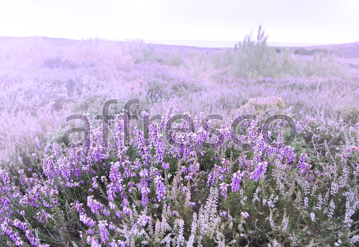 ID13449 | Pictures of Nature  | Meadow flowers | Affresco Factory