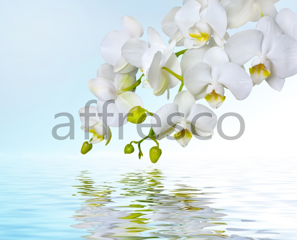 ID12673 | Flowers | white orchid reflected | Affresco Factory