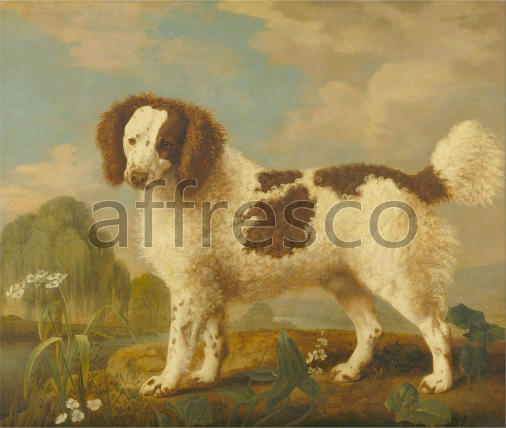 Paintings of animals | George Stubbs Brown and White Norfolk or Water Spaniel | Affresco Factory