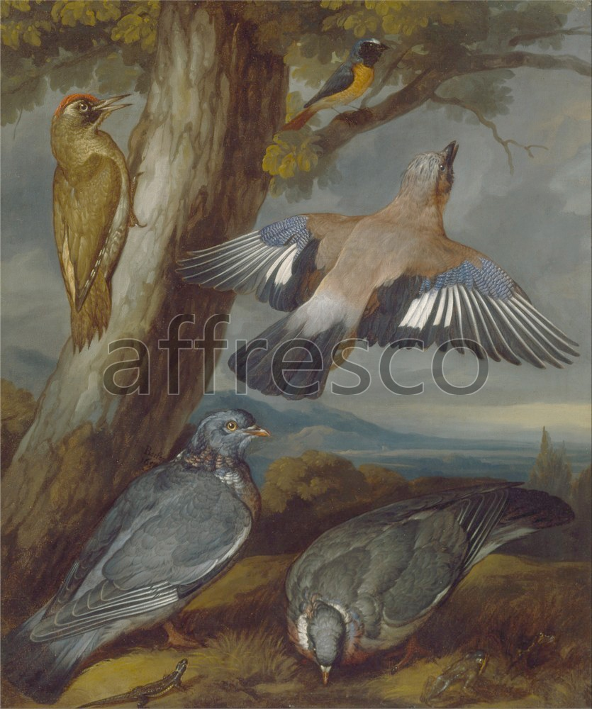 Paintings of animals | Francis Barlow Jay Green Woodpecker Pigeons and Redstart | Affresco Factory