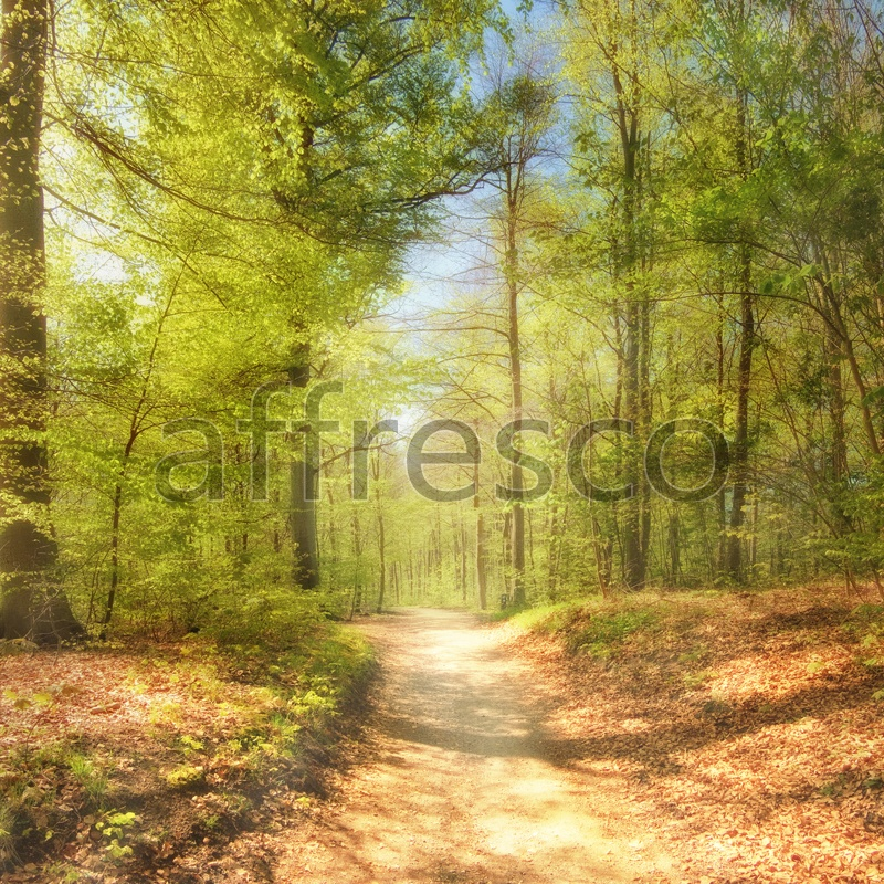 ID10934 | Pictures of Nature  | Forest path | Affresco Factory