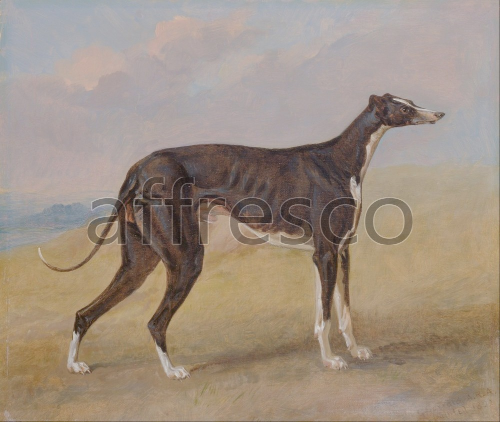 Paintings of animals | George Garrard Turk a greyhound the property of George Lane Fox | Affresco Factory
