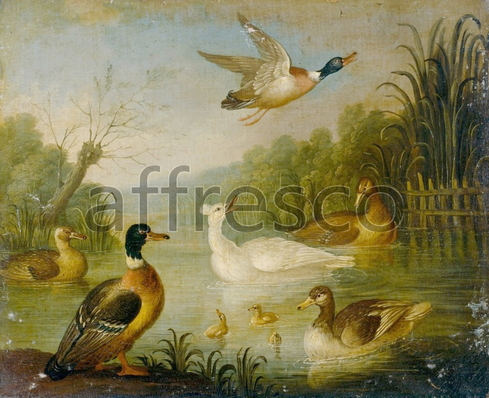 Paintings of animals | Cradock, Marmaduke Mallards on a Pond | Affresco Factory