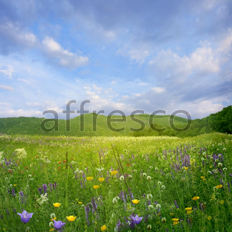 ID12428 | Pictures of Nature  | Field flowers | Affresco Factory