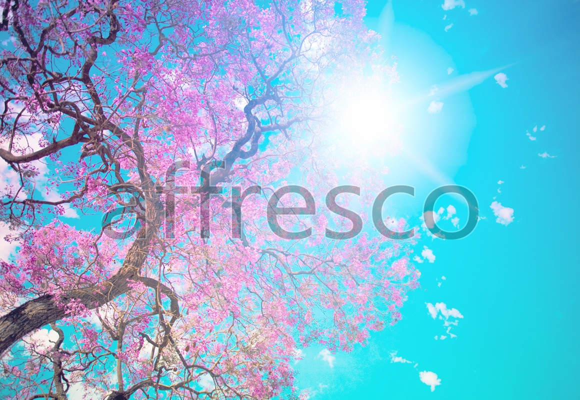 ID13496 | Sky | Blossoming tree in sunlight | Affresco Factory