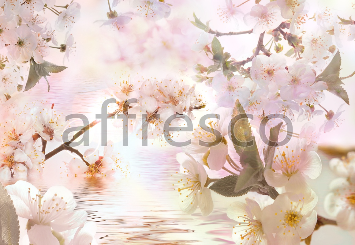 7124 | Flowers | blooming Oriental cherry near the water | Affresco Factory